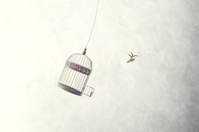 Uccellino che scappa dalla gabbia