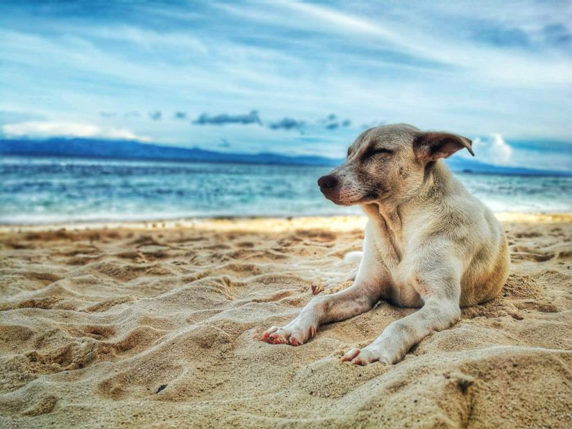 Migliori ciotole da viaggio per il tuo cane adatte a cibo e acqua