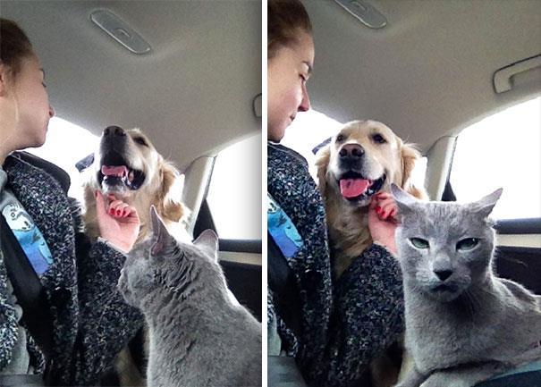 Un gatto distoglie lo sguardo dalle coccole del padrone al cane