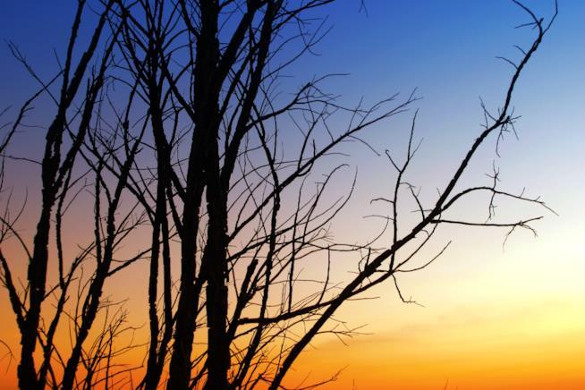 Alberi secchi al tramonto