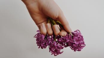 Mani che stringono un fiore