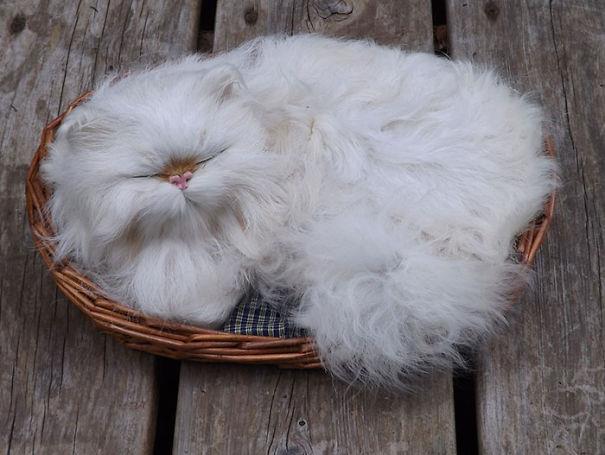 Un gatto bianco nella cesta