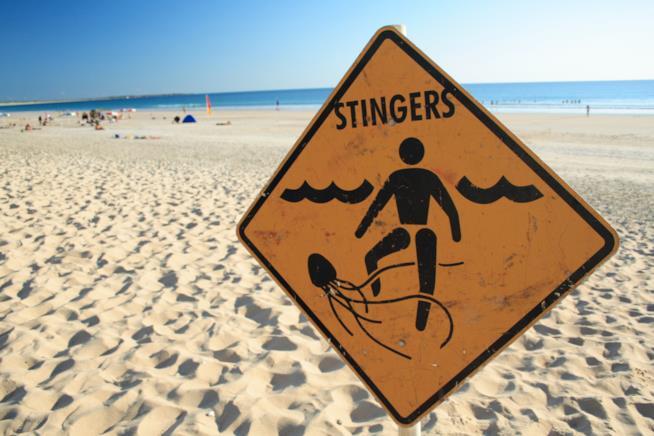 Cartello in spiaggia che mette in guardia sulla presenza di meduse nel mare