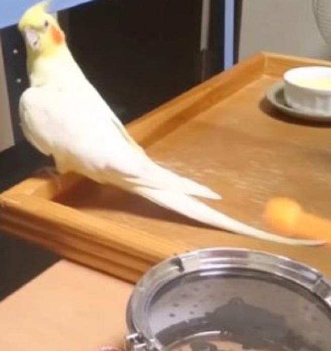 Il pappagallino Mr Inko