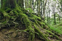 Radici di alberi nel bosco