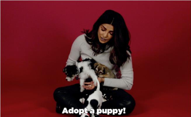 Priyanka Chopra con dei ciccioli