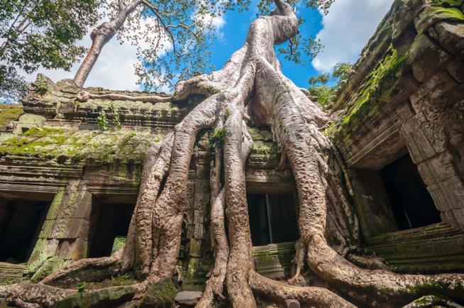 Tempio di Ta Prohm in Cambogia