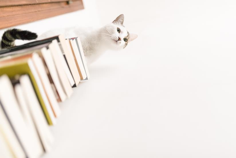 Gatto in cima a una pila di libri