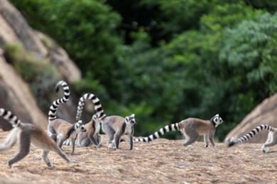 Tour del Madagascar sud e soggiorno mare a Ifaty