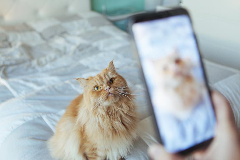 Gatto in posa per la foto