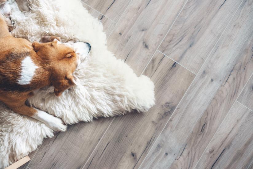 Cane dorme sul tappeto