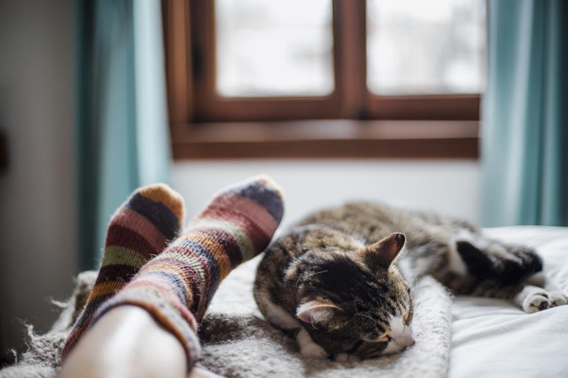 Gatto dorme sul letto vicino alla proprietaria