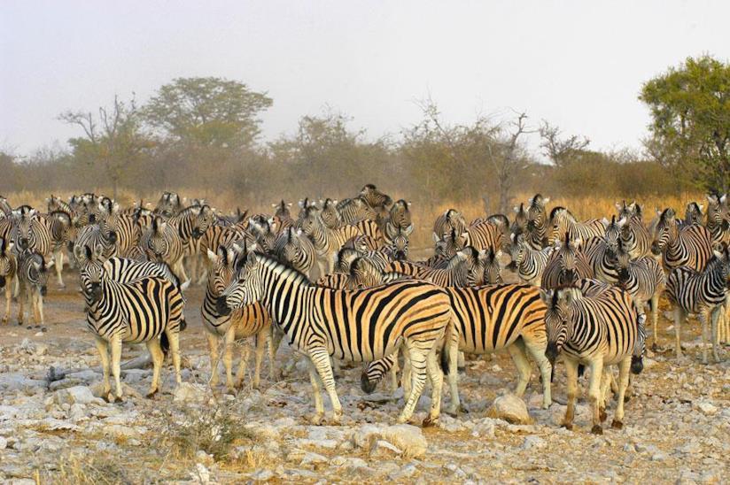 Namibia 5 mete da non perdere: safari