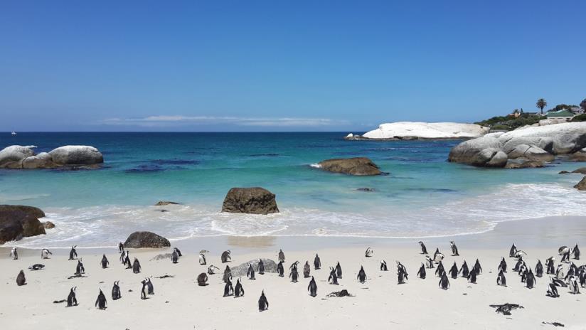 I pinguini di Boulders Beach in Sud Africa
