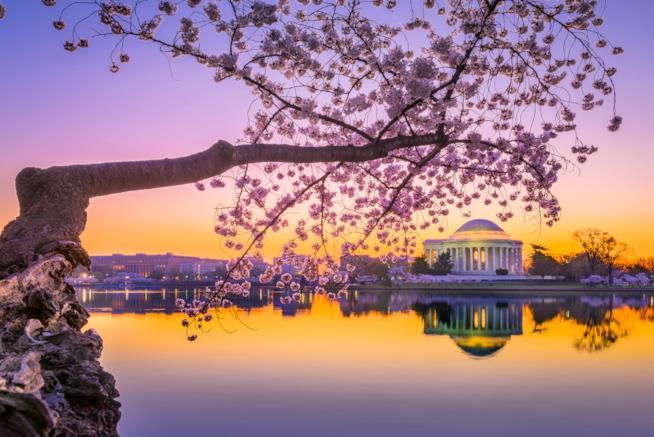 Il Jefferson Memorial di Washington