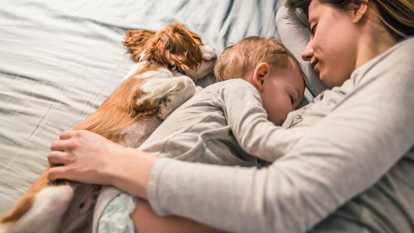 Cucciolo dorme con un bambino