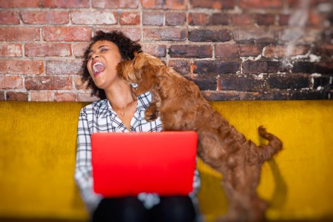 L'immagine di un cane che fa le feste alla padrona sul divano