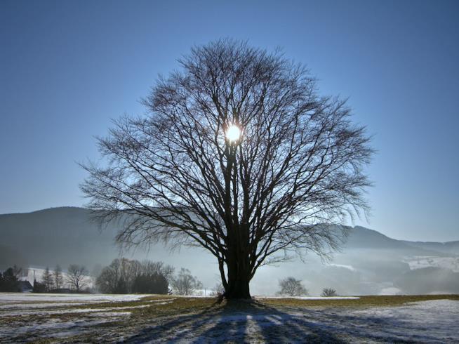 Un albero che incontra il sole nel giorno del solstizio d'inverno