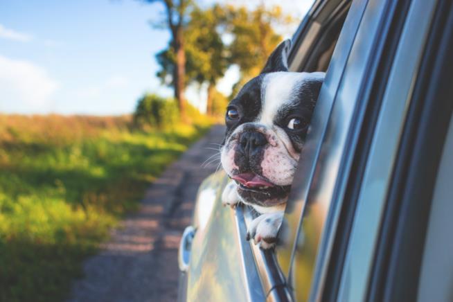 La migliore ciotola da viaggio per il tuo cane in automobile
