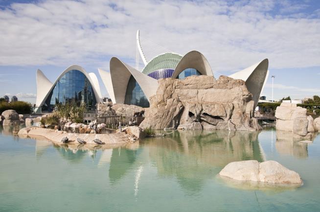 Oceanografic di Valencia per vacanze con tutta la famiglia