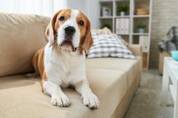 Cane da solo a casa sul divano
