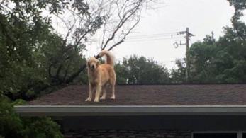 Il cane texano che vive sul tetto