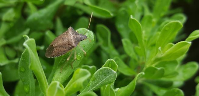 Punture e morsi d 39 insetti come prevenirli riconoscerli e for Puntura cimice