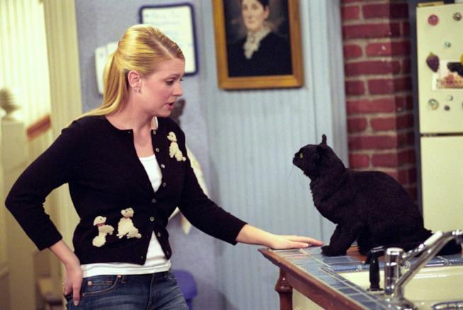 Sabrina Vita da Strega, Sabrina e il gatto nero Salem
