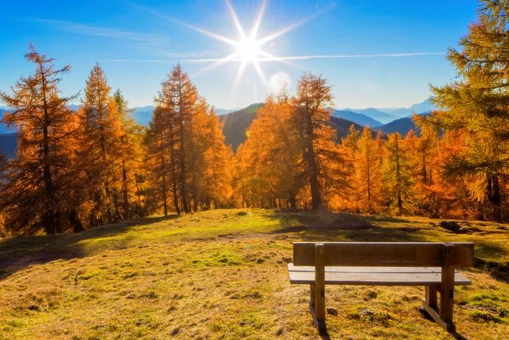 Bosco di larici in autunno
