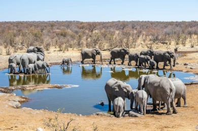 Tour con campo tendato nel deserto in Sudafrica e Namibia