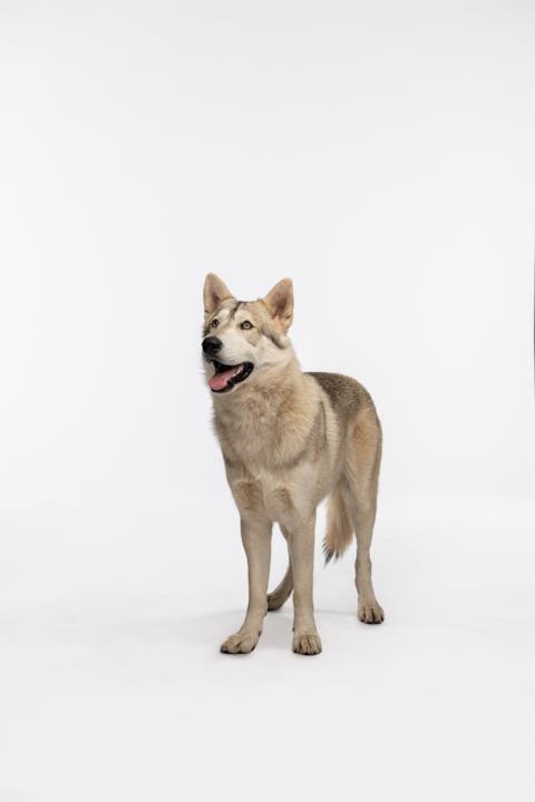 Il nuovo cane Rollo
