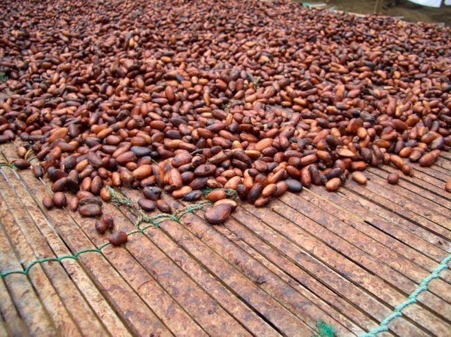 In Ghana a San Valentino: ecco la giornata mondiale del cioccolato