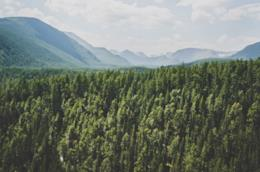 Panorama di una valle con una foresta
