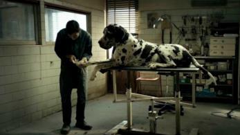 Una scena di Dogman