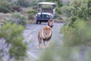 Safari classici in Sudafrica