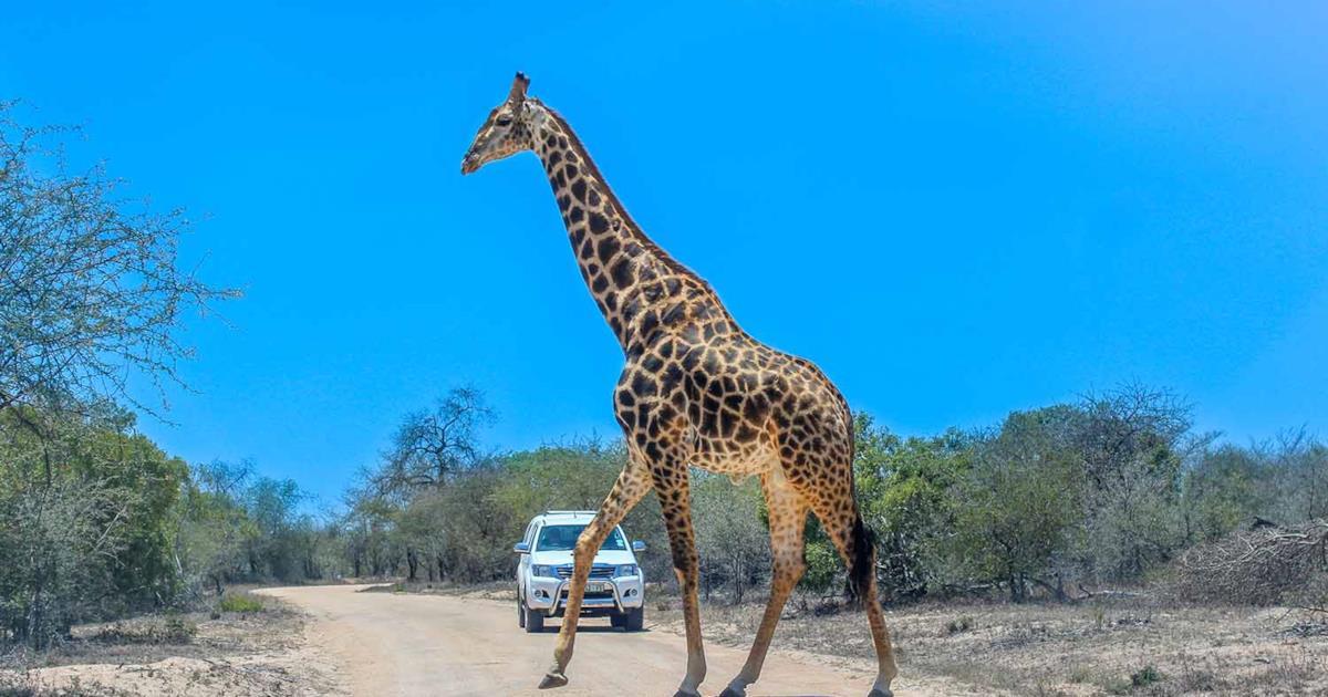 Vacanze in Africa: i 10 safari più belli