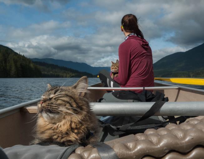 Bolt e Keel amano le avventure, anche in barca