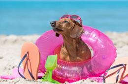 Un cane sulla spiaggia con il salvagente