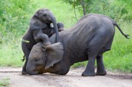 Papà elefante con il suo cucciolo