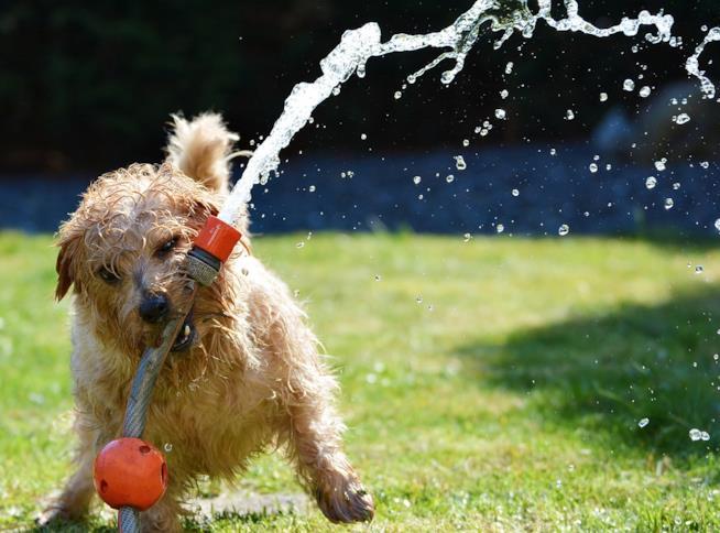 Un cane che gioca con un tubo per innaffiare