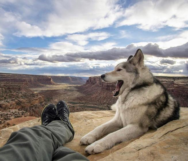 Loki si riposa in cima al Grand Canyon insieme a Kelly