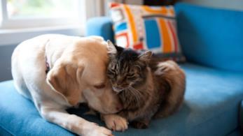 Un'immagine di cane e gatto che si fanno le coccole sul divano