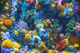 Flora e fauna di un fondale marino
