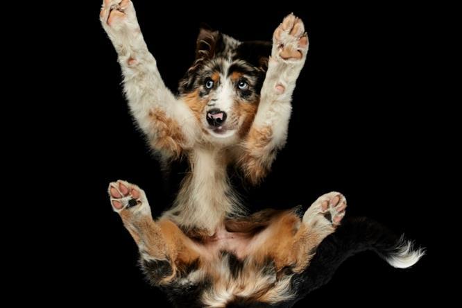 Un cane dagli occhi chiari fotografato dal basso