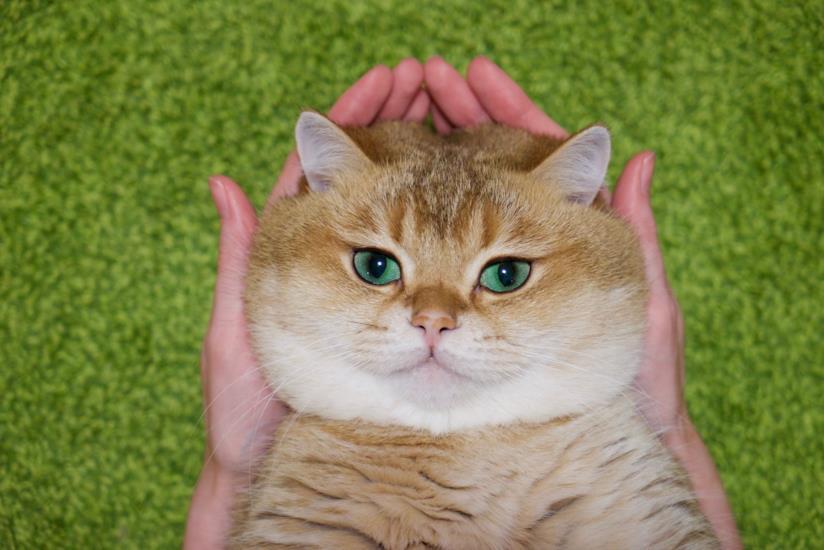 Hosico cat influencer