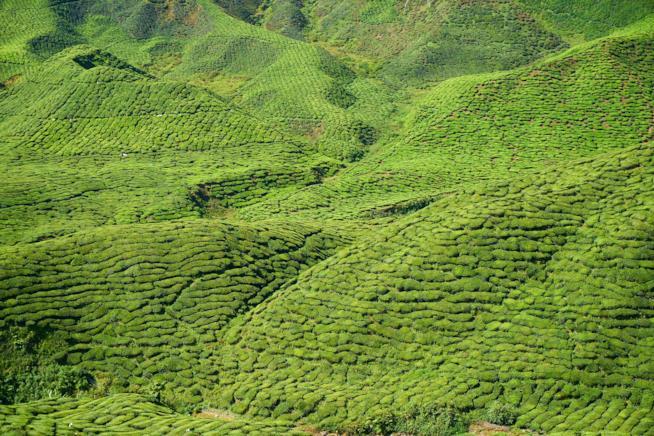 Colline malesiane immerse nel verde