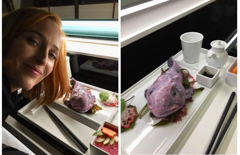 Il pesce blobfish in una scena di X Files