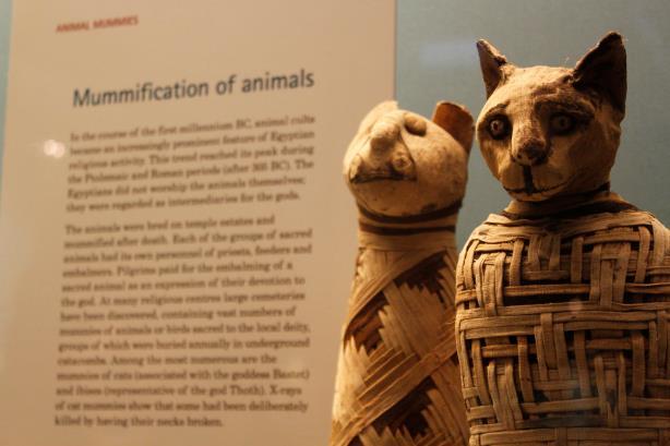 I gatti mummificati al British Museum