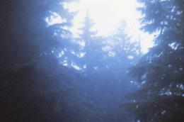 Un bosco illuminato dalla luce del sole