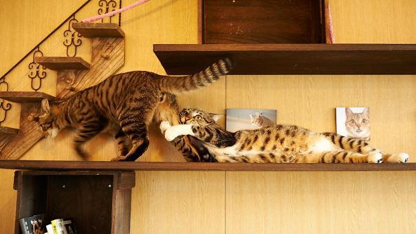 Due gatti sulla mensola di una casa mentre camminano